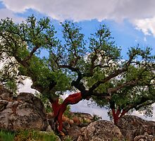 cork trees, Marvao, Alto Alentejo, Portugal by Andrew Jones