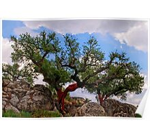 cork trees, Marvao, Alto Alentejo, Portugal Poster