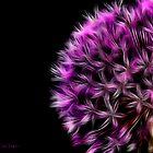 Purple Haze by Chrissie Taylor