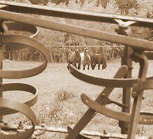 Harrow and horses in Sepia by Gary Boudreau