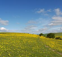 One Million Buttercups by mikebov