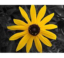Yellow Daisy  Photographic Print