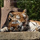Sibling Love I by Alannah Hawker