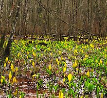 Skunk Cabbage by Mike  Kinney