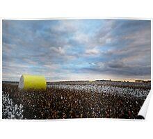 Cotton Fields Poster