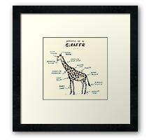 Anatomy of a Giraffe Framed Print