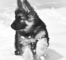 Jaxx In The Snow by Kerri Gallagher