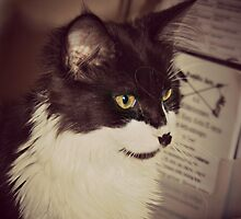 Stray Cat Portrait Sepia by patjila