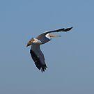 Pelican 123 by Brenda Loveless