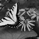 Butterfly Black and White by Sunshinesmile83