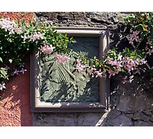 Wall Flower Photographic Print