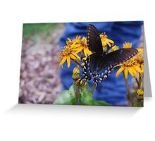 Pipeline Swallowtail VA State Insect Greeting Card