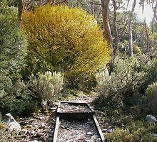 Fagus and Alpine Yellow Gums,Lake Lilla track,Cradle Mountain, Australia. by kaysharp