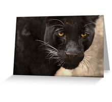 Leopard Eyes Greeting Card