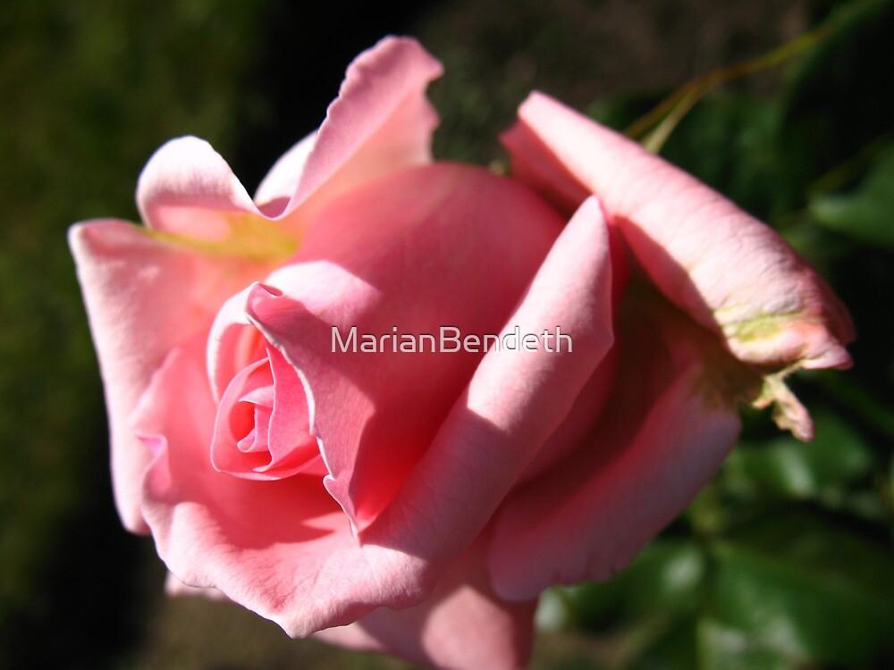 Aria Rose by MarianBendeth