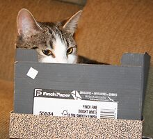 Cat  in the Box  by heatherfriedman