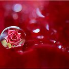 Rose and Droplet by Kym Howard