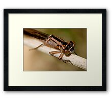 A Hairy Situation Framed Print