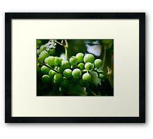 Winery Shoot Framed Print