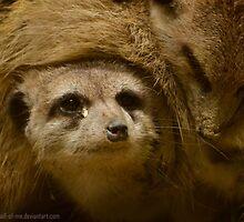 Meerkats by theotherhalf