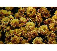 Gold Marigolds Photographic Print