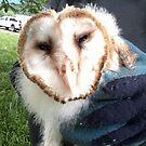 Baby Barn owl by SKNickel