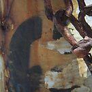 Rusty Hydrant by Tama Blough