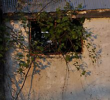 Window to memories by Sandra Guzman