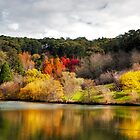 Mt Lofty autumn by Jessy Willemse