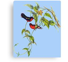 The buffy hummingbird (Leucippus fallax) Canvas Print