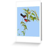 The buffy hummingbird (Leucippus fallax) Greeting Card
