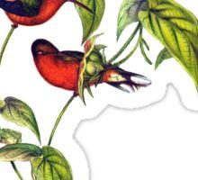 The buffy hummingbird (Leucippus fallax) Sticker