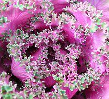 pink pattern by vigon