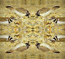 Killdeer Reflections by Jean Gregory  Evans