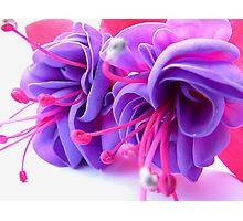 Fuschia Fantasy Photographic Print