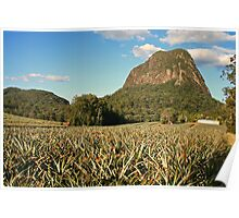 Pineapple Plantation Poster
