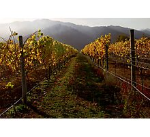 Autumn Vines Photographic Print