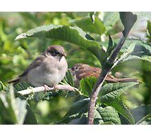 New Baby Birds. Photographic Print