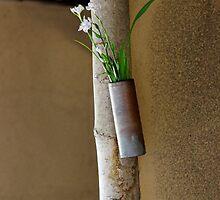 Wild Irises at Bashoan by nekineko