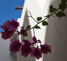 Contemplating Mediterranean Vacations - Whitewashed Walls and Bougainvilleas by Georgia Mizuleva