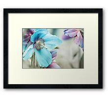 Himalayan blue Framed Print