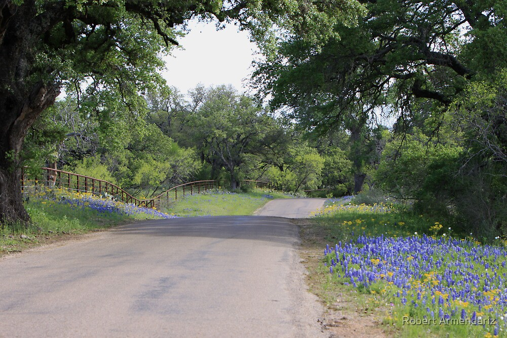 Country Road and Bluebonnets by Robert Armendariz