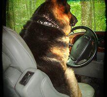 Designated Driver by Marija
