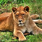 The Lioness by Larry Trupp