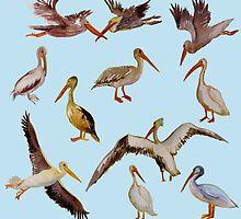 Pelicans by MegJordi