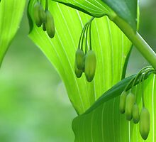 Solomon's Seal In Early May by Jean Gregory  Evans