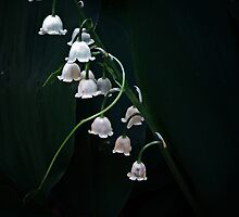 Lily Of The Valley by James Birkbeck
