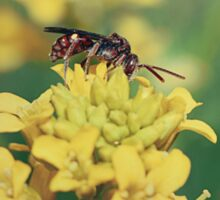 Wasp on Flower - Nature Photography Sticker