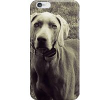Weimaraner - Animal Photography iPhone Case/Skin
