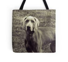 Weimaraner - Animal Photography Tote Bag
